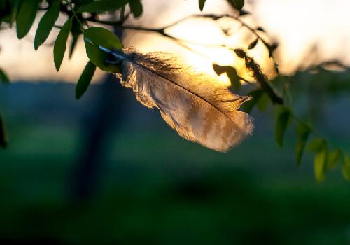 夕焼けと羽根